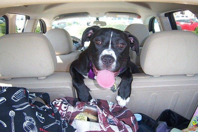 Hundebox Auto Faltbar