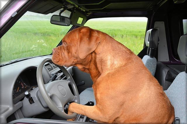 Hundebox Auto XXL
